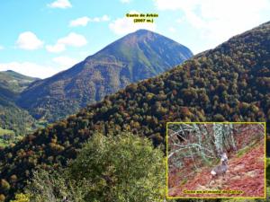 Monte del Gato