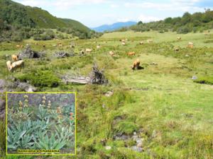 Llano de Cuesta Piedra (Chano de Custapiedra), zona donde nace el río de Corros